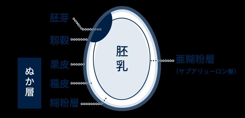 お米の構造