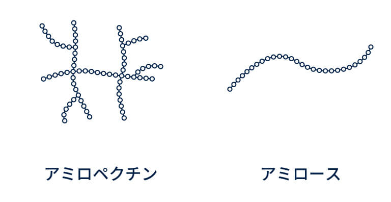 お米のイネの種類